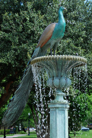 peacock fountain in a park